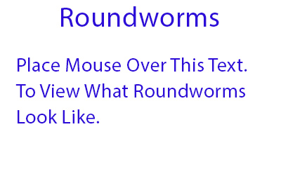 roundworms